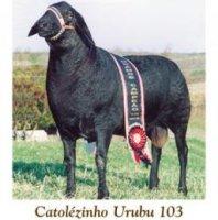 catolezinho-urubu