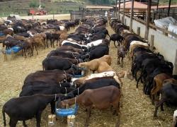 Novas publicações abordam nutrição e sanidade de caprinos e ovinos