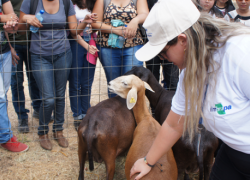 Estratégia de nutrição para fêmeas ovinas traz impactos produtivos